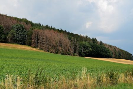 Land stockt Mittel für Wiederbewaldung und Schadensbewältigung im Wald auf